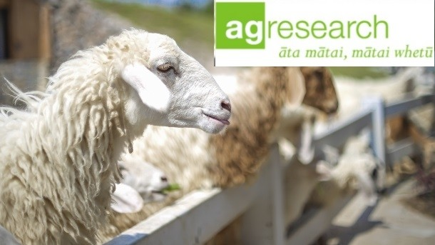 agresearch-studies-could-help-nz-sheep-milk-industry_wrbm_large